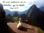 Juan 14 14